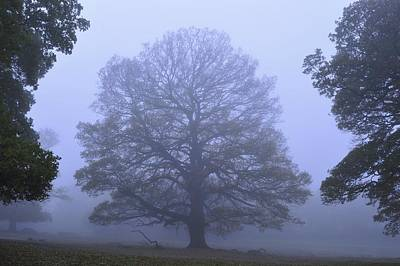 Photograph - Misty Park  by Marek Stepan