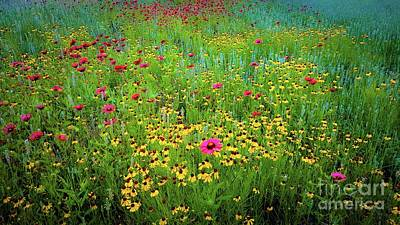 Art Print featuring the photograph Mixed Wildflowers In Bloom by D Davila