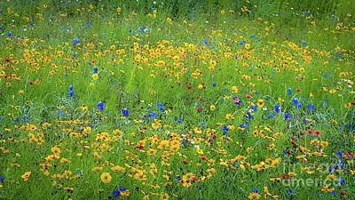 Art Print featuring the photograph Mixed Wildflowers In Texas 538 by D Davila
