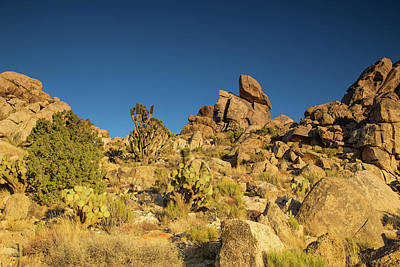 Photograph - Mojave Colors by Kunal Mehra