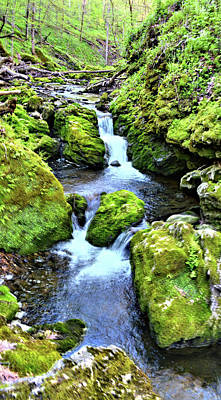 Photograph - Moine Creek by Bonfire Photography