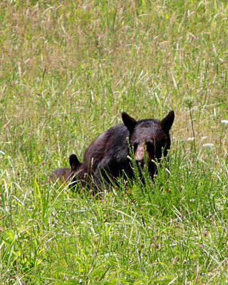 Photograph - Mom With Cub  by Kevin Myers