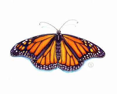 Catherine White Painting - Monarch Butterfly by Catherine Noel