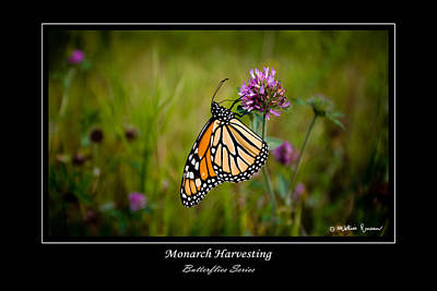 Monarch Harvesting Art Print by Mathias Rousseau