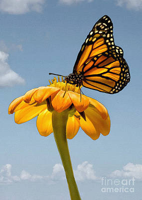 Photograph - Monarch by Sharon Foster