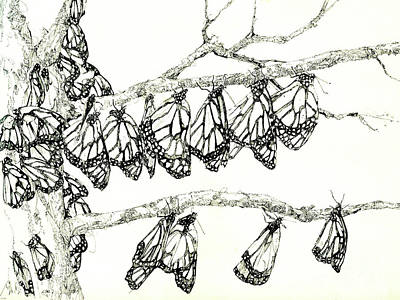 Drawing - Monarch Tree by Lizi Beard-Ward