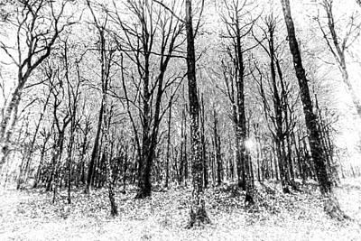 Fine Dining - Monochrome Snow Forest Art by David Pyatt