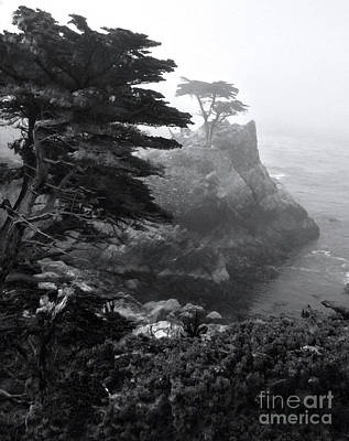 Photograph - Monterey California - Lone Pine by Gregory Dyer