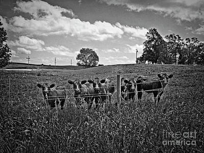 Photograph - Moo by Jenness Asby