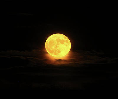 Photograph - Moon by Rowana Ray