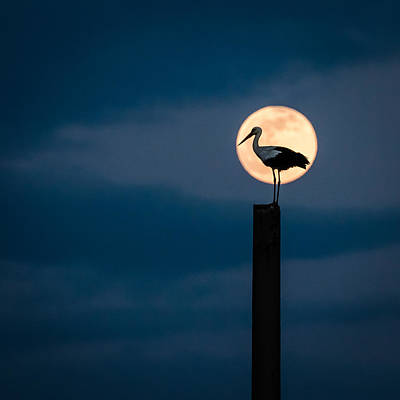 Moon Stork Print by Catalin Pomeanu