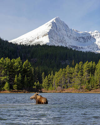 Photograph - Moose Country by Jack Bell