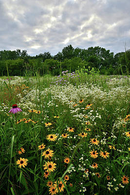 Photograph - Moraine Hills Wildflowers by Ray Mathis