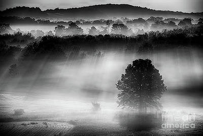 Photograph - Morning Fog by Nicki McManus