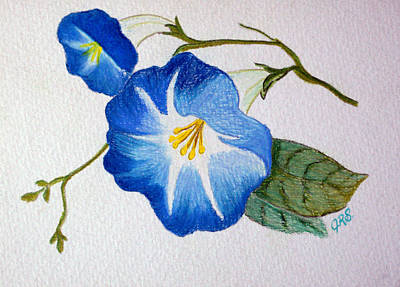 Drawing - Morning Glory by J R Seymour