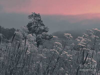 Photograph - Morning Light by Marcia Lee Jones