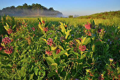 Photograph - Morning Light On Milkweed In Lost Valley Of Glacial Park by Ray Mathis