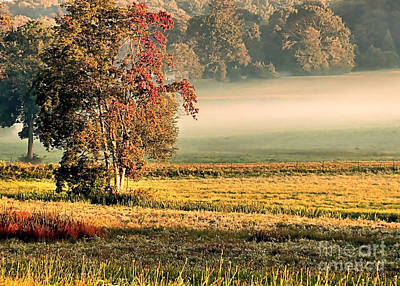 Photograph - Morning Mist In Chiltonville by Janice Drew