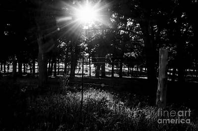 Photograph - Morning Shadows by Diana Mary Sharpton