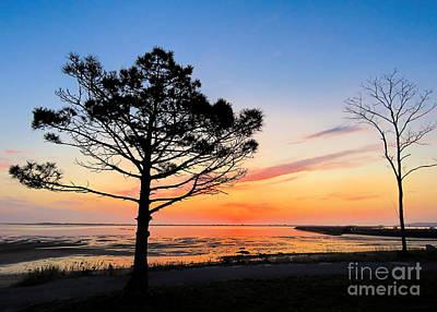 Photograph - Morning Sun  by Janice Drew