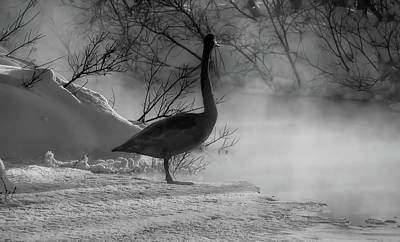 Photograph - Morning Swan In Russia by Pixabay