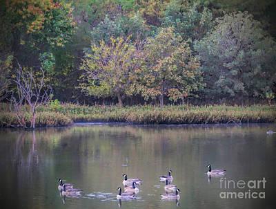 Photograph - Morning Swim by Elizabeth Winter