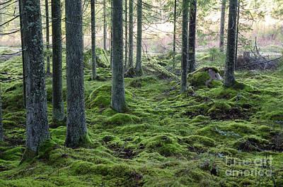 Photograph - Mossy Green Forest by Kennerth and Birgitta Kullman
