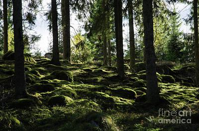 Art Print featuring the photograph Mossy Rocks by Kennerth and Birgitta Kullman