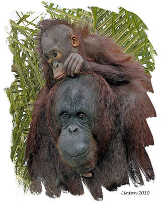 Orangutan Digital Art - Mother And Child by Larry Linton