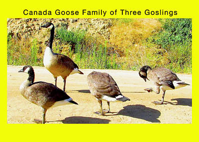 Mother Goose With Three Goslings Art Print