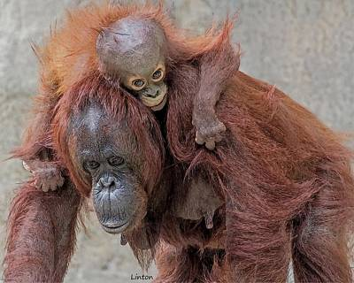 Orangutan Digital Art - Motherhood 2 by Larry Linton