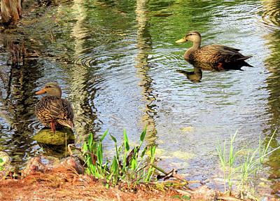 Photograph - Mottled Duck Pair by Rosalie Scanlon