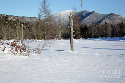 Mount Carrigain - White Mountains New Hampshire Usa Art Print by Erin Paul Donovan