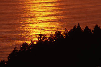 Valentines Day - Mount Tamalpais State Park by Soli Deo Gloria Wilderness And Wildlife Photography