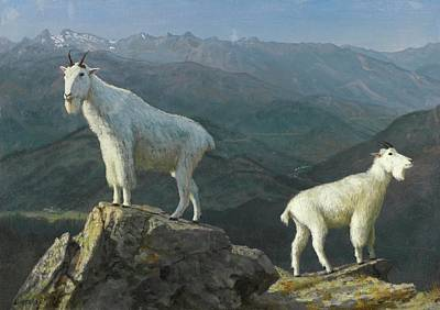 Mountain Goat Painting - Mountain Goats by MotionAge Designs