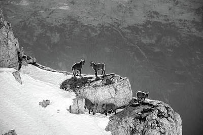 Scenic Photograph - Mountain Goats by Medina Rosa