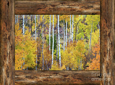 Photograph - Colorful Aspen Forest Rustic Cabin Window View  by James BO Insogna