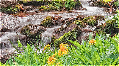 Photograph - Mountain Stream by Utah Images