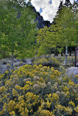 Photograph - Mt. Charleston Basin by Ray Mathis