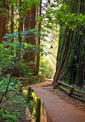 Redwoods Digital Art - Muir Woods by Patricia Stalter
