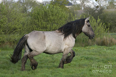 Gaiting Photograph - Mulassier Mare by Jean-Louis Klein & Marie-Luce Hubert