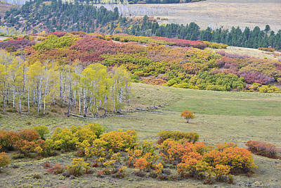 Photograph - Multicolored Hillsides Along Last Dollar Road by Ray Mathis