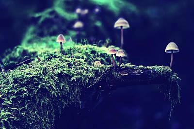 Photograph - Mushroom Group by Pixabay