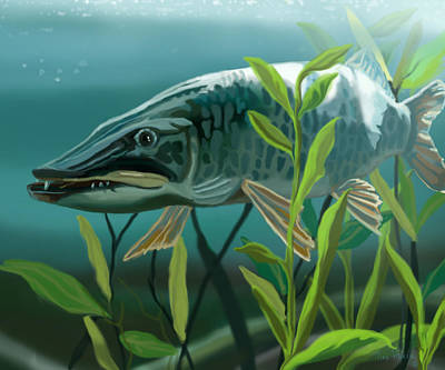 Muskie Painting - Muskie Lurking by Tina Hariu