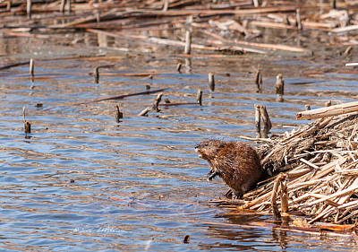 Food And Flowers Still Life - Muskrat Spring by Edward Peterson