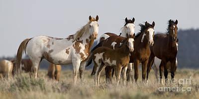 Mustangs In Nevada Art Print by Jean-Louis Klein & Marie-Luce Hubert