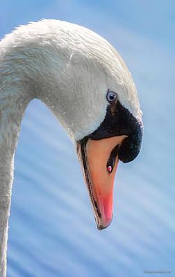 Mute Swan Photograph - Mute Swan  by LeeAnn McLaneGoetz McLaneGoetzStudioLLCcom