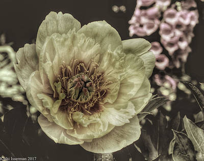 Photograph - Muted Tones by Kathi Isserman
