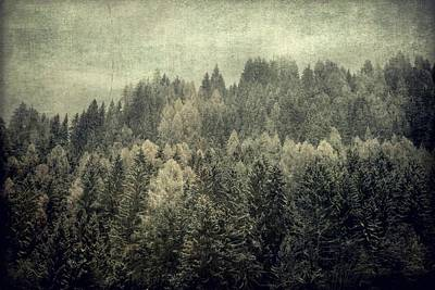 Photograph - Mystic Woods by Vittorio Chiampan