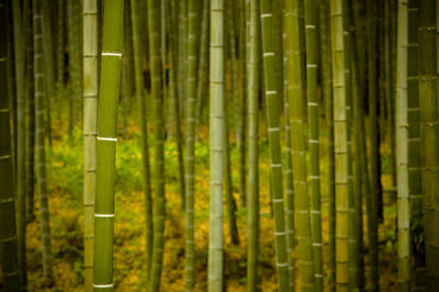 Photograph - Mystical Bamboo by Sebastian Musial